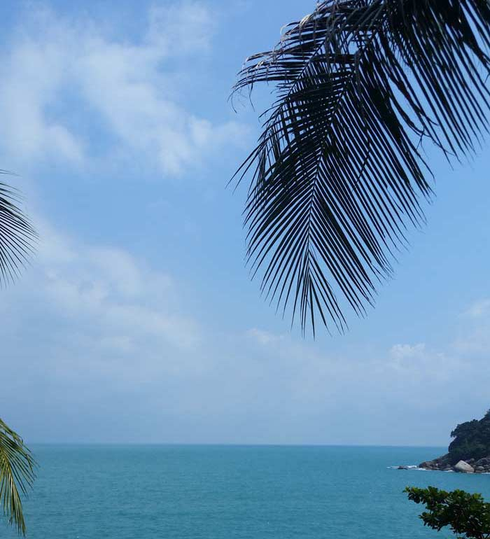 Palm Tree Over the Gulf of Thailand