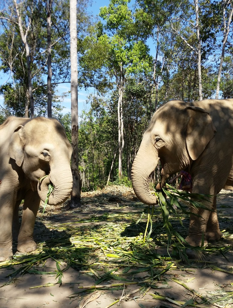 elephants at elephant jungle sanctuary