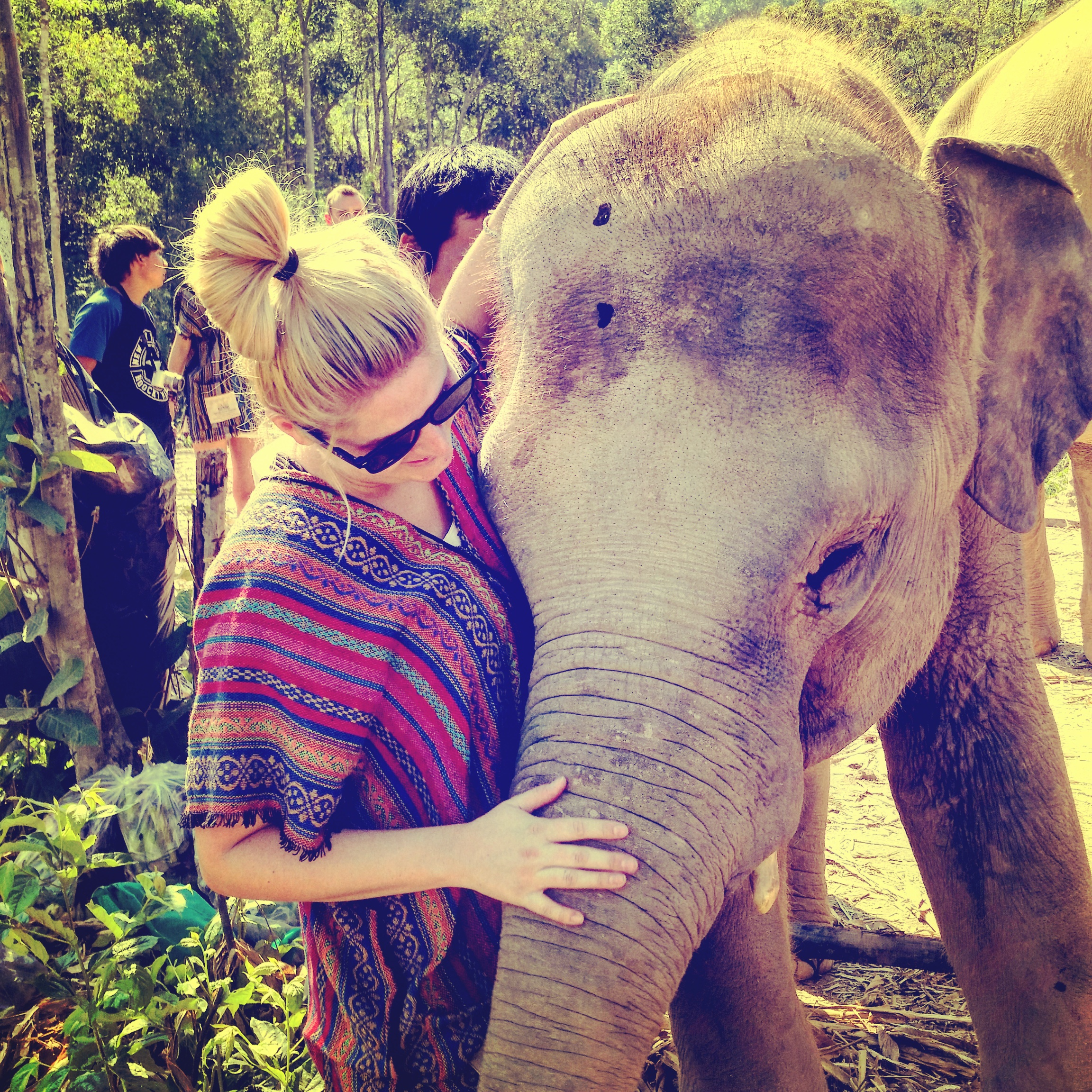 elephant jungle sanctuary with baby elephant in chiang mai