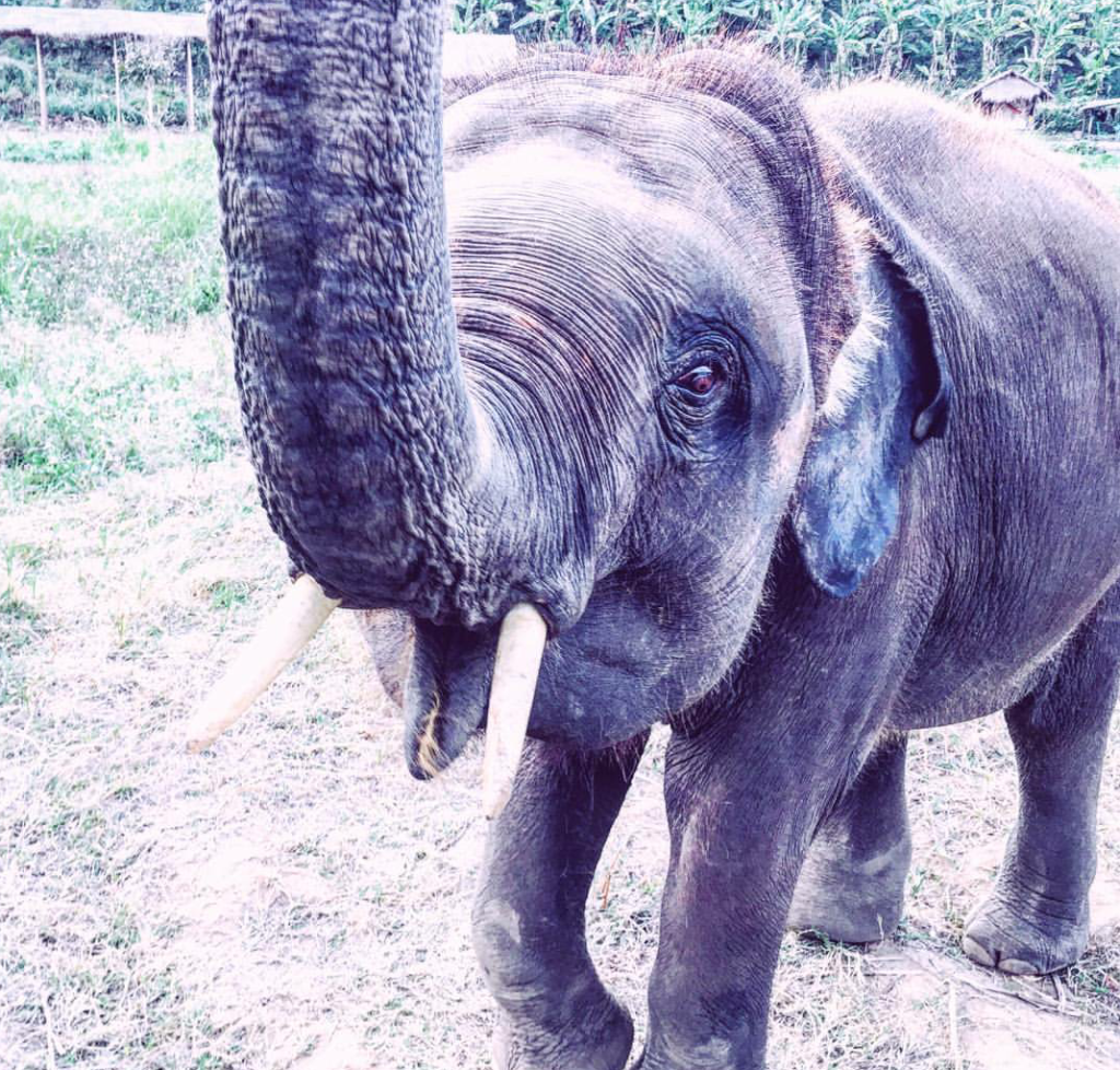 top ten reasons to holiday in thailand baby elephant