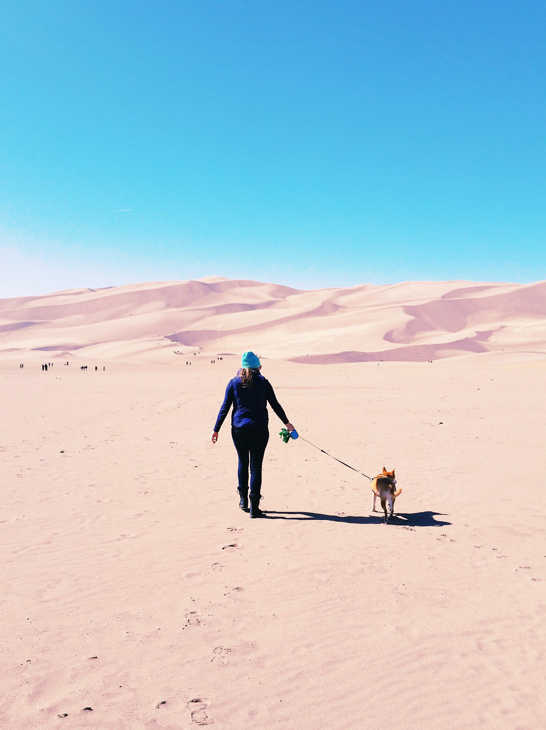 pros and cons of pet travel